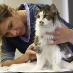 Tips for Brushing Your Cat's Coat